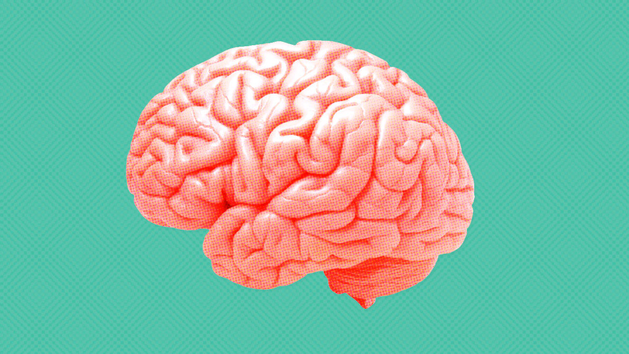 Тему, картинка мозга с надписью
