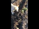Песик играет с лягушкой
