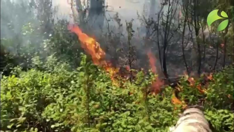 Лес горит под Ноябрьском