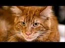 Л.П.Питерская-Кот в сапогах ( по мотиву сказки Ш.Перро)18г( автор Питерская, муз Чигадаев)