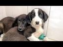 Своими силами ловим и спасаем диких щенят Нужна помощь на питание и лечение puppies need help