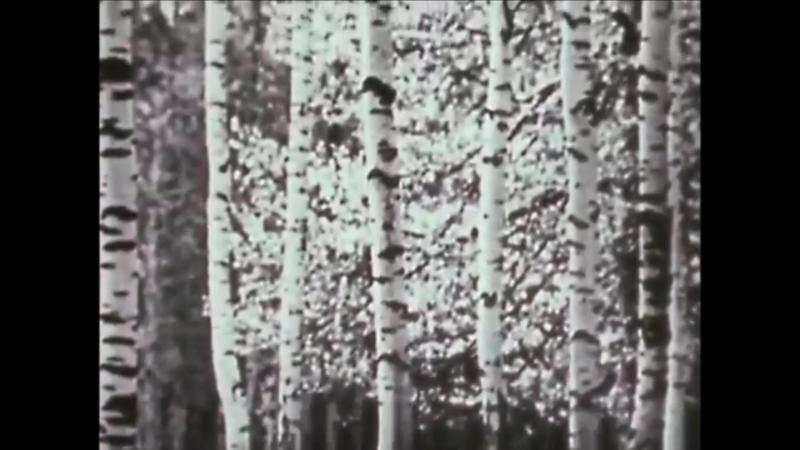 НАША БИОГРАФИЯ, 1976г. - Я,ТЫ,ОН,ОНА
