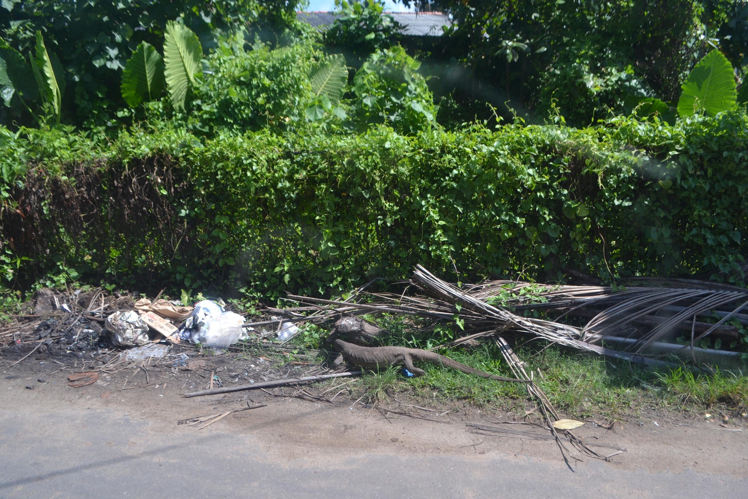 Шри Ланка (фото) - Страница 3 G0VLzfOP8Xo