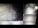 туман из мушек