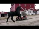 конь ардын