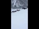 Табун Карачаевских лошадей спускается с гор