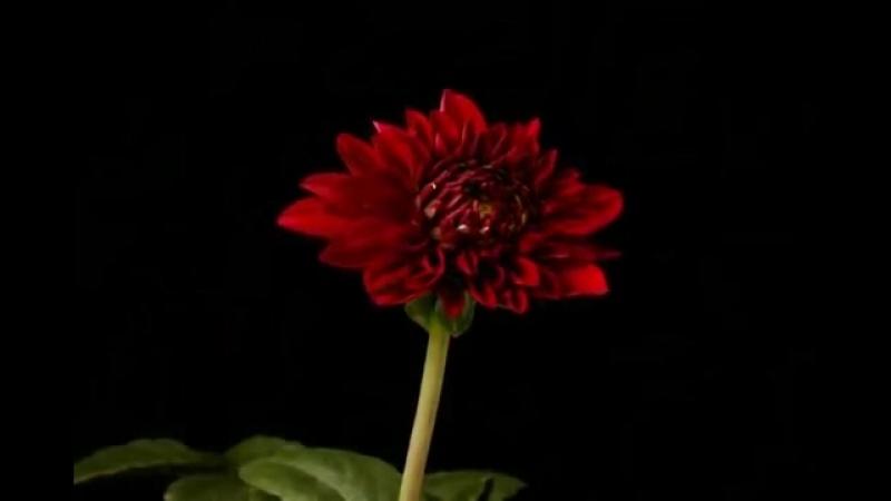 П.И.Чайковский - Вальс цветов из балета Щелкунчик