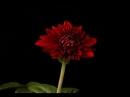 П И Чайковский Вальс цветов из балета Щелкунчик