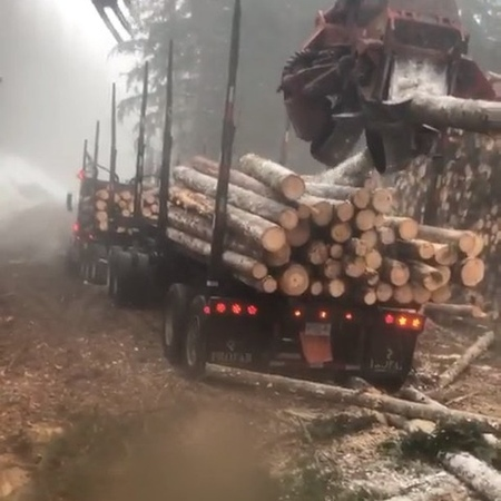 ⠀⠀⠀⠀⠀⠀⠀ ⠀⠀ 🔝ЛЕСНОЕ ДЕЛО🔝 on Instagram ❇️Присылайте ваше видео связанное с спецтехникой Тайгой лесом на почту lesnoedv@ Все видео буд