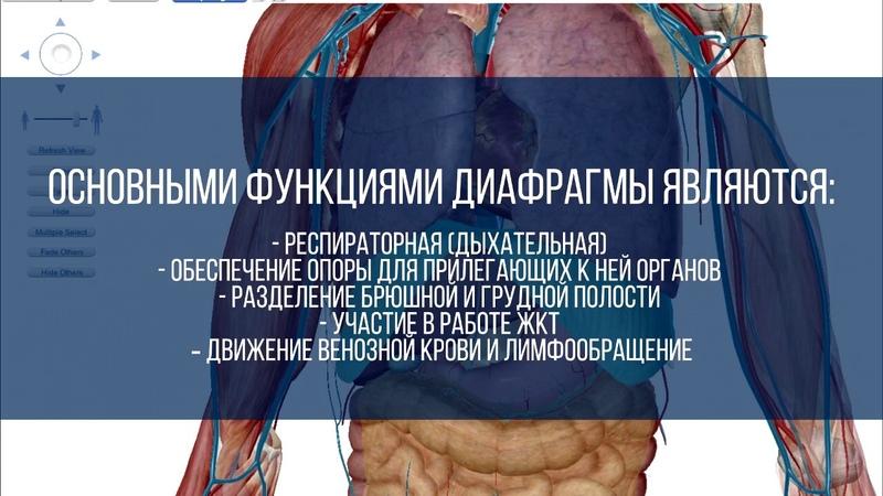 Эпизод 06 Как дышать диафрагмой Плюсы диафрагмального дыхания Часть 1