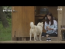 9 эп Шинни и собака Little House in the Forest 박신혜, 3가지 방법 끝에 봉이 앉히기 성공! 180601 EP.9