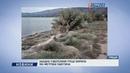 Західне узбережжя Греції вкрила 300 метрова павутина