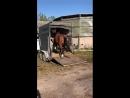 Та самая лошадь что убила перевозчика трапом, после 4ёх часовой дрессировки