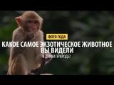 Какое самое экзотическое животное вы видели в дикой природе