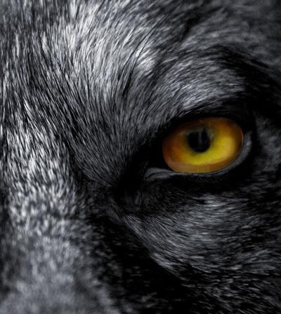 Ян Азин-Волк