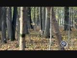 Дмитрий Хрусталев в роли редкого амурского лесного кота:)