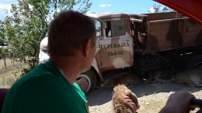 Олег Зубков спасает львят родившихся в Саванне Одного забрали Тайган Крым