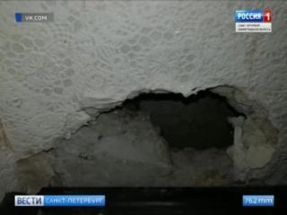 Крыса напала на двухлетнюю девочку в квартире жилого дома на Карташихиной улице