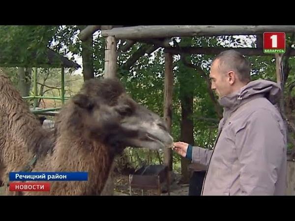 Верблюд Гоша теперь живет в деревне Грановка Речицкого района