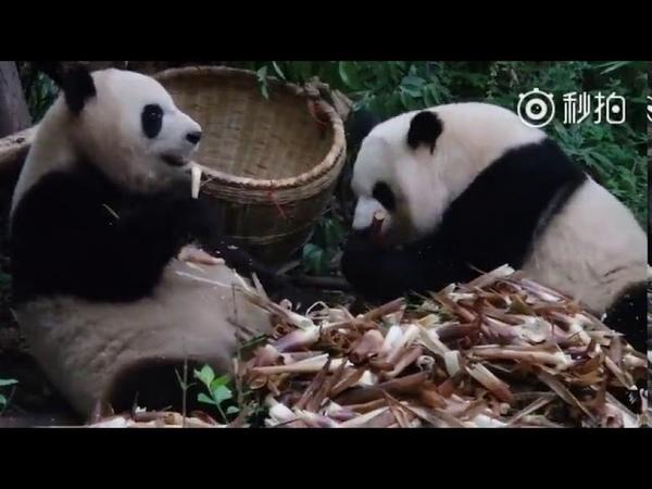 Mei Lun and Mei Huan (0518)