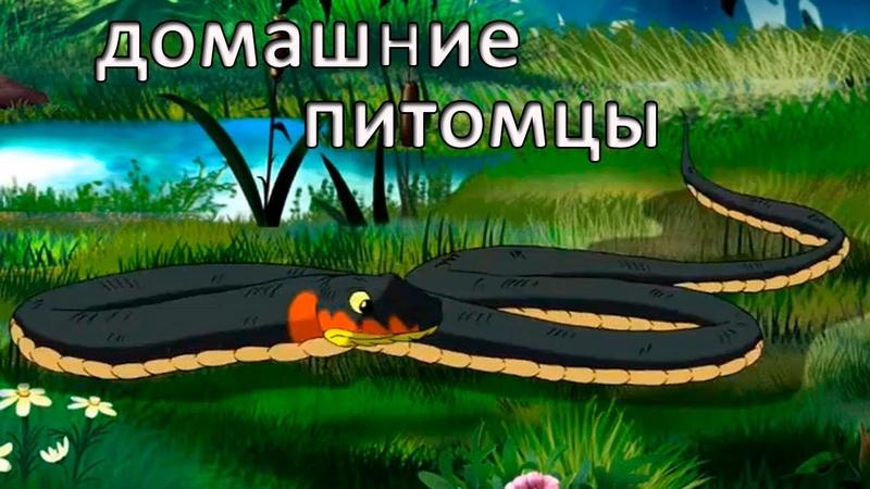 Развивающие мультфильмы Совы Мои Домашние Питомцы Террариум