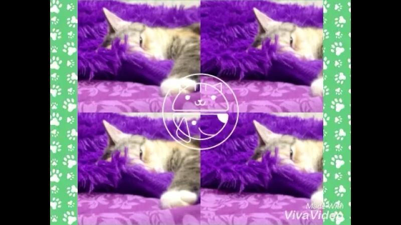 Слайдшоу про мою кошечку