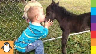 Cutest Horse Babies 🔥 Funny and Cute Horses Videos Compilation