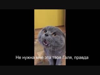 Кот говорит - Голова моя болит