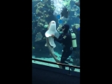 Зебровая акула подплыла к мужчине, который чистил аквариум и напросилась на ласку. Мужчина