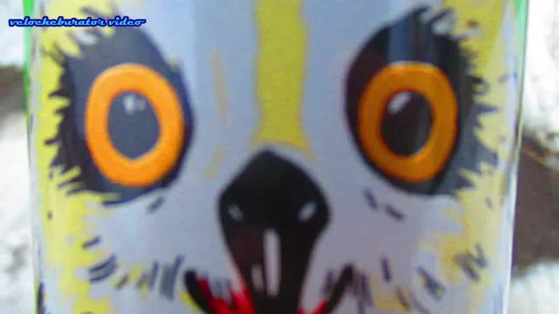 Подозрительная сова в глаза мне смотри и не надо меня преследовать бычара