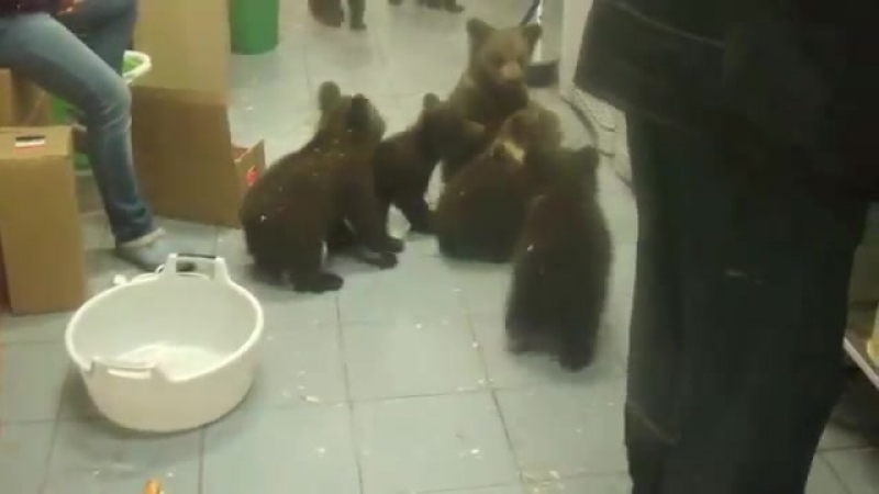 Медвежья банда малолетних преступников