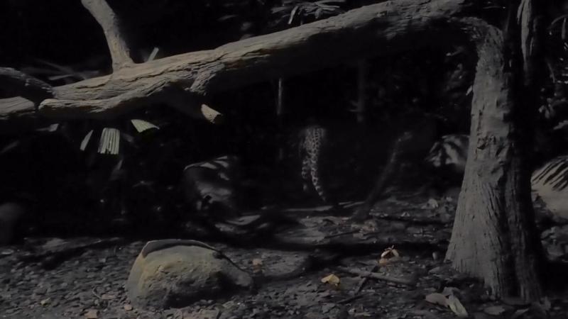 Гепард в сингапурском зоопарке