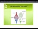 Лекция 5 Олег Стулов Компоненты пищи Жиры часть2 Правильное питание и здоровый образ жизни