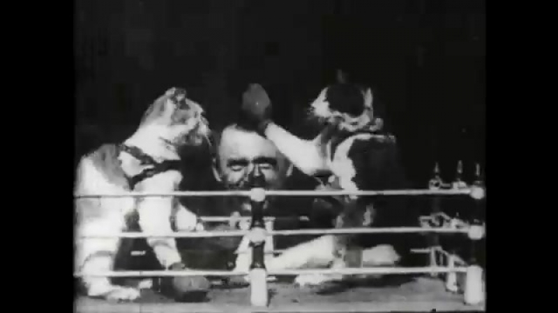 Dickson The boxing cats Prof Weltons 1894