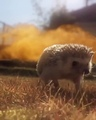 Cool Hedgehogs don't Look at Explosions