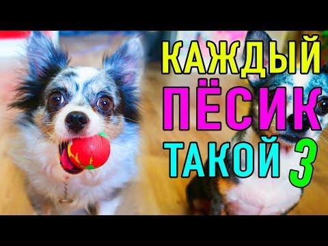 КАЖДЫЙ ПЕСИК ТАКОЙ 3   ПАРОДИЯ Magic Pets