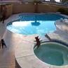 Французский бульдог упал в бассейн