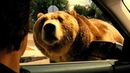 Мы купили зоопарк HD 2011