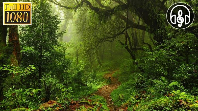 Звуки природы, живой лес, пение птиц, 8 часов релакса для сна