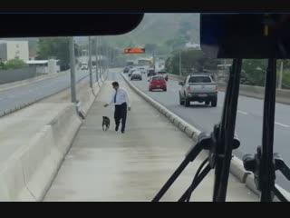 Собака попала в ловушку на оживленной трассе! Все ехали мимо, и только водитель автобуса остановился, чтобы помочь…