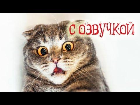 ПРИКОЛЫ С КОТАМИ С ОЗВУЧКОЙ на русском Угарный юмор от PSO