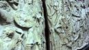 Trajan's Column Unrolled