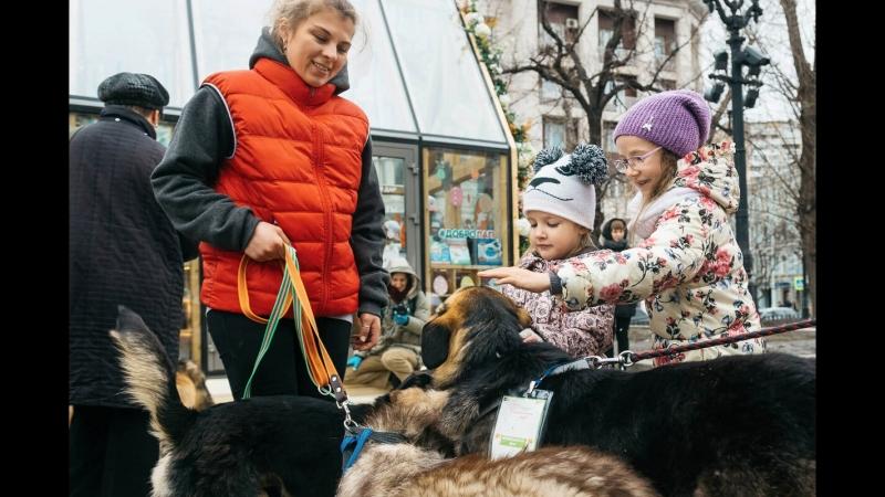 Благотворительная акция в помощь фондам бездомным животным на Тверском бульваре