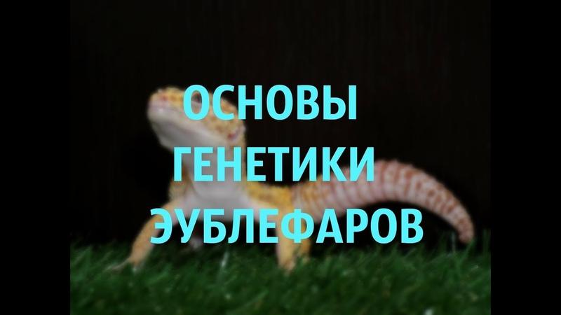 ОСНОВЫ ГЕНЕТИКИ ЭУБЛЕФАРОВ