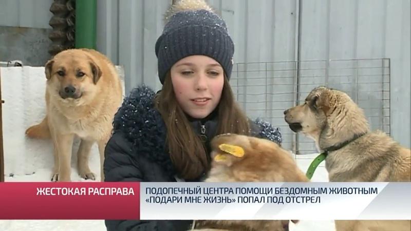 Подопечный центра помощи бездомным животным «Подари мне жизнь» попал под отстрел