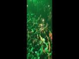 Эксклюзивное видео со вчерашнего благотворительного выступления XXXTentacion в Помпано Бич, Флорида.