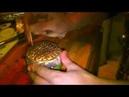 Как правильно приготовить кальян. Табак Al Fakhe