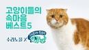 집사가 모르는 고양이의 속마음 BEST5 - 수리노을 x 대화가필요한개냥 콜라보 프 4719