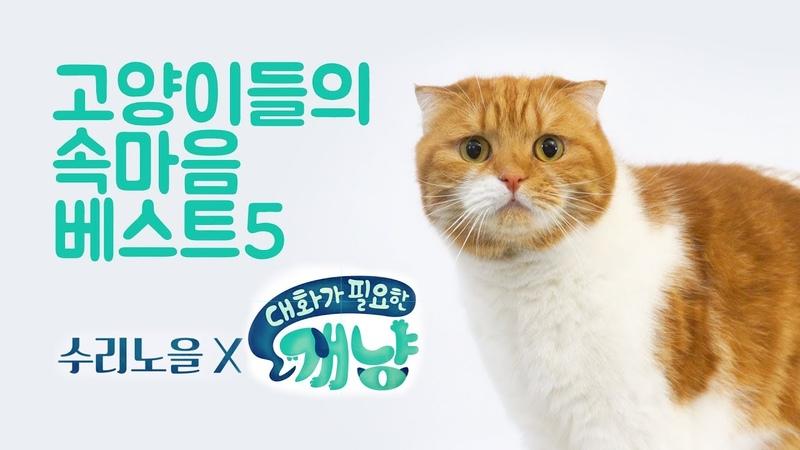 집사가 모르는 고양이의 속마음 BEST5 - 수리노을 x 대화가필요한개냥 콜라보 프4719