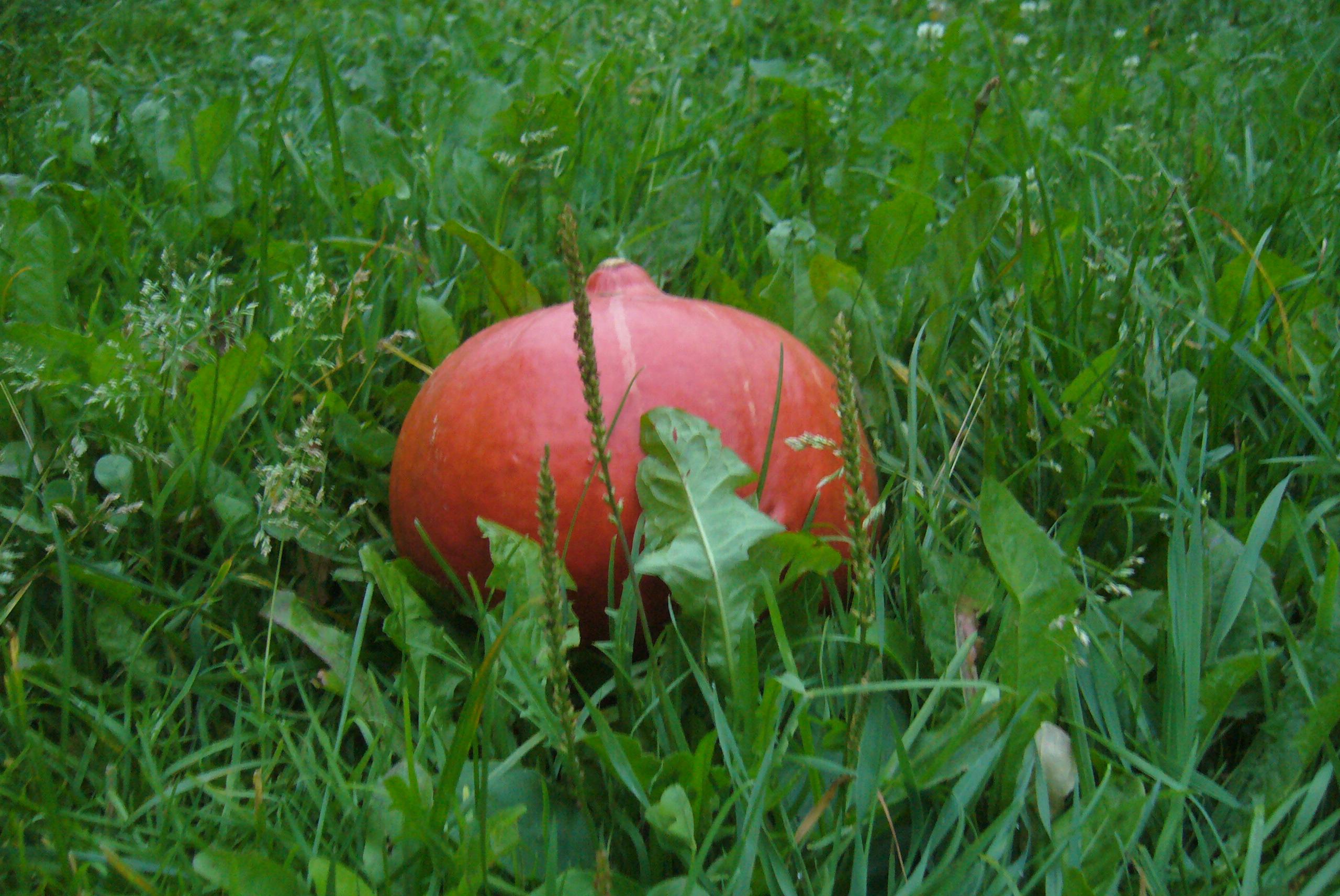 И форма у нее забавная осень